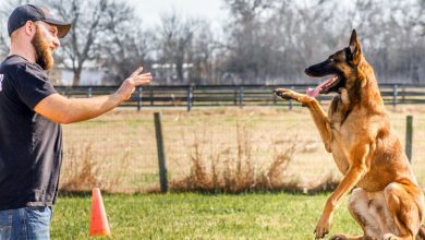 Photo of What I Wish Everyone Knew About Dog Training