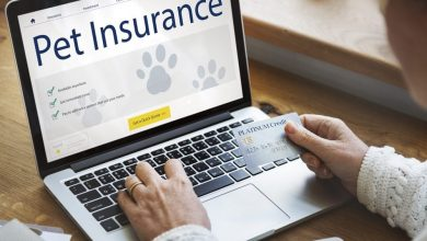 Photo of Do you need a Pet Insurance Plan?