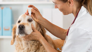 Photo of How to pick the very best Vet For The Pet