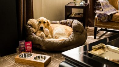 Photo of How to locate a Pet Friendly Hotel